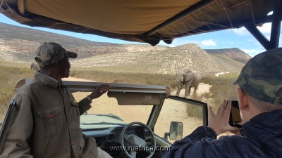 Safari just 2 hours from Cape Town