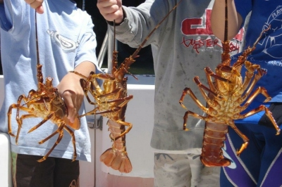 Lobsters in Cape Town